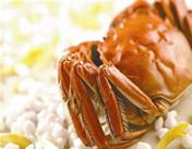 九月团脐十月尖,美味大闸蟹上市了