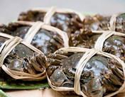 [巴仙蟹王]讲述古代帝王和大闸蟹的那些故事